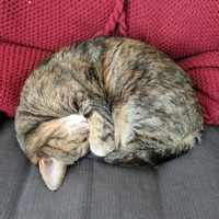 A sweet cat curled up in a ball.